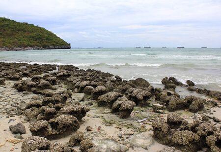 Sea coral in Thailand photo