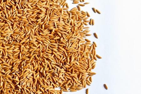 Golden Rice in Thailand.