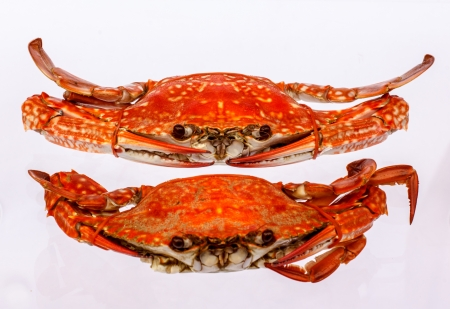 Cooked crab on a white background