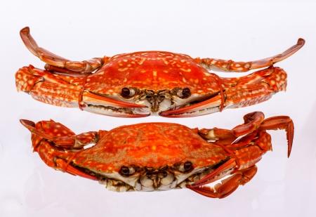 Gekookte krab op een witte achtergrond