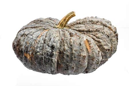 Pumpkin in white background Stock Photo
