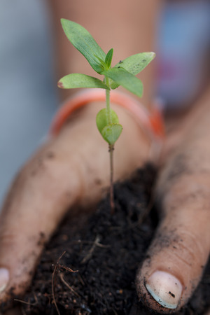 Small green seedling in hand. Stock Photo