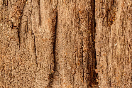 seamless texture of old wood with cracks pattern photo