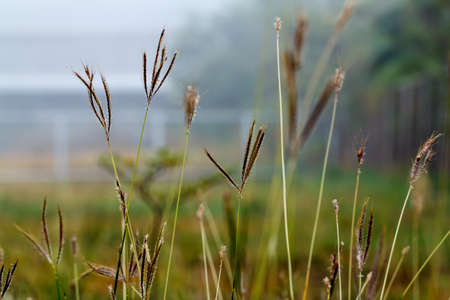 Morning beautiful grass in the winter. Stock Photo