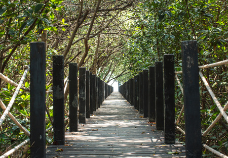 Tree tunnel and wooden bridge in mangrove photo