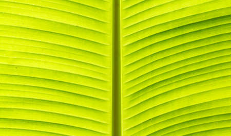 banana skin: Banana leaf leaves skin naturally beautiful