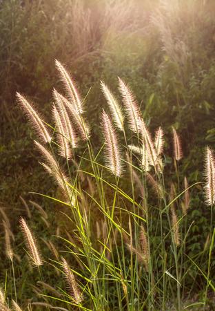 Bloemen gras achtergrond wazig