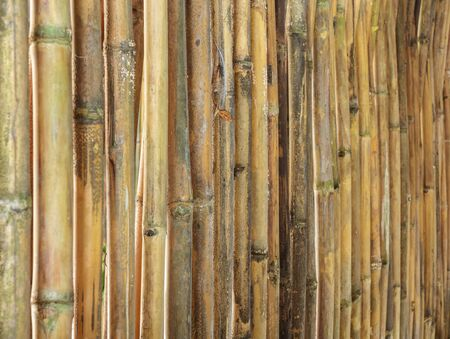 rural areas: Bamboo fences in rural areas.