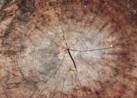 deforestacion: La deforestación causa el calentamiento global de aumento de la conciencia concepto mente consciente
