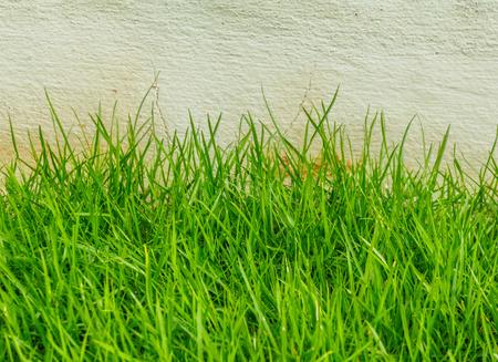 front yard: Beautiful green grass area front yard garden. Stock Photo
