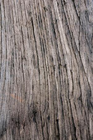 rayé de la peau bois nature Old belle
