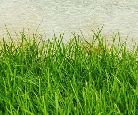 grass area: Beautiful green grass area front yard garden. Stock Photo