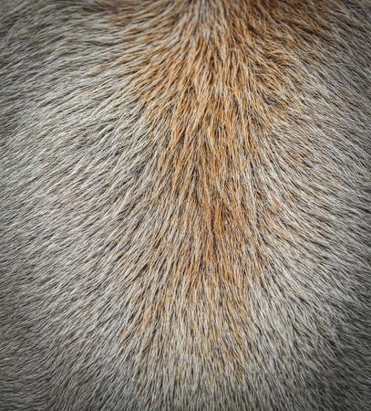 image plus proche du cuir bovin, laine de vache fond