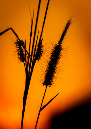 Close up tropical grass flower of beautiful in nature Stock Photo