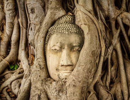 The head of the Buddha image of Wat Mahathat in Phra Nakhon Si Ayutthaya, Thailand