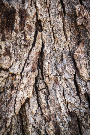 Dead tree wood texture seamless in nature Stock Photo