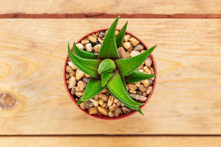 Top view pattern of mixed cactus isolated on wooden background Banque d'images