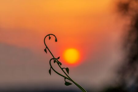 silhouette of young plant in front of blurred sun setting in background