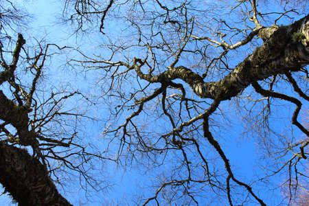 emty: High trees with leafless Stock Photo