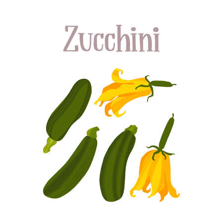 Fresh Zucchini vegetable and flowers. Healthy nutrition product.