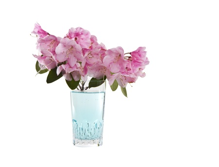 Cherry Blossoms with fresh aqua water and glass on white