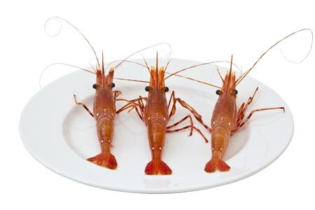 Fresh live shrimp on solid white dinner plate Stock Photo - 9640179