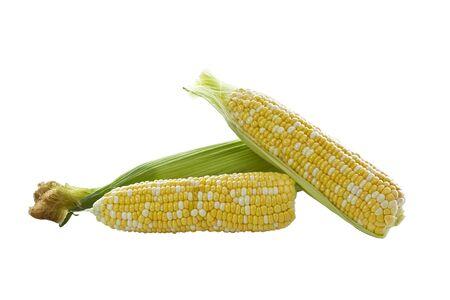corn yellow: Blanco y amarillo ma�z-mezcla de ma�z sobre fondo blanco