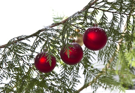 Snow on Christmas ornaments hanging from evergreen tree photo