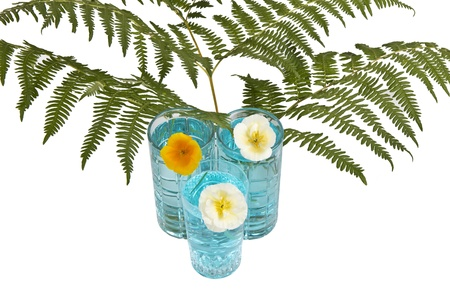 Glasses of water with ferns and flowers on white background