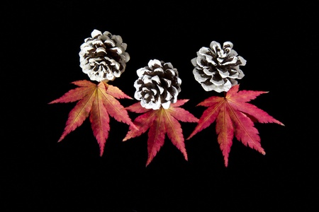 Vibrant maple leafs and pine cones on black back ground photo