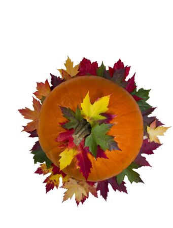 Large Orange pumpkin with vibrant maple leafs on white background Stock Photo - 11095676