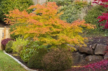 Lovely fall garden with turning maple leaf trees Stock Photo - 11138795