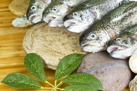 nutritive: Native rainbow trout on rocks and plants with bamboo background Stock Photo