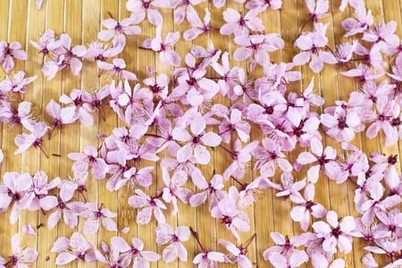Pink cherry blosssoms on natural bamboo wood background Stock Photo - 12955912