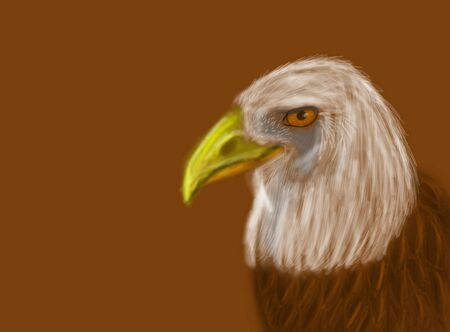 Computer Drawing of American Bald Eagle on neutral background photo