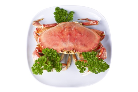 Freshly cooked dungeness crab with parsley in white plate on white background photo