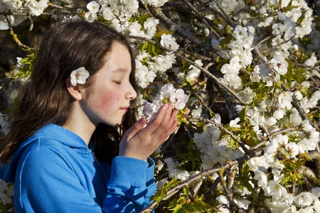 preasure: Young girl smelling the fuji cherry blossoms in full bloom  Stock Photo