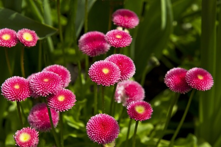 Blooming Pink flowers surround by green plants