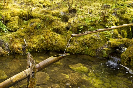 Spring Water flowing through Bamboo sticks in Japanese Garden with moss in background photo