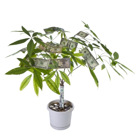 Tree with paper and coin currency in pot on white background photo
