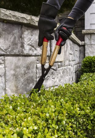 Two hands wearing gloves while cutting hedges with manual shears photo