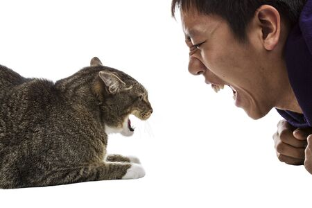 Angry gray tabby cat snarls at man on white background  photo