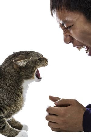 Gray tabby cats snarls at snarling man on white background  Stock Photo - 14066963