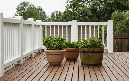 albahaca: Home Garden Patio con albahaca y el perejil en madera de cedro natural con �rboles y el cielo de fondo
