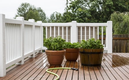 Basil and Parsley just watered with garden hose laying on Patio Stok Fotoğraf - 14615851