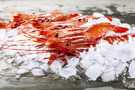 Freshly caught shrimp in ice on fishing dock  photo