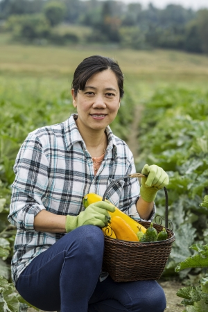 Mature Asian women harvesting fresh zucchini and cucumbers with field in background  photo