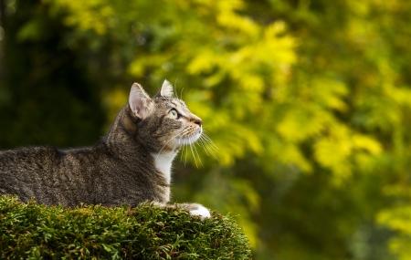 Junge kurzhaarige graue Tabby-Katze auf der Oberseite des Baumes mit Saison Herbst Bäume im Hintergrund