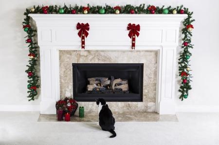 chemin�e gaz: Chat de la famille regardant Bougies de No�l pr�s foyer au gaz naturel avec des ornements de vacances Banque d'images