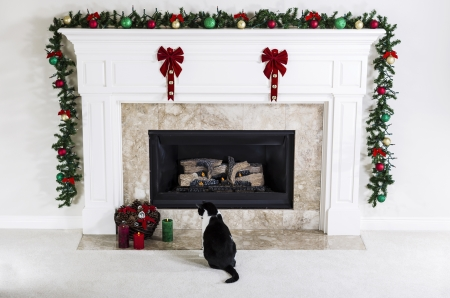 fireplace: Family cat looking at Christmas Candles near natural gas fireplace with holiday Ornaments